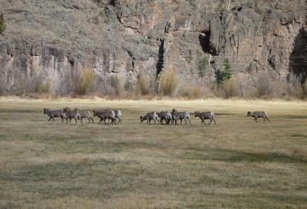 Gunnison image